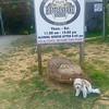 Rattlesnake Saloon