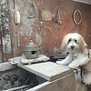 OLLIE THE DOG AND POTTERY