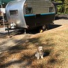OLIVER WITH A SMALL TRAVEL TRAILER