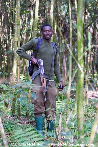 Unfortunately the mountain gorillas require armed guards to protect them from poachers.