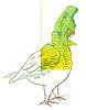 splotch633_bird