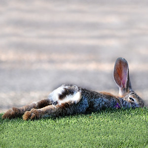 Happy Bunny on the Green