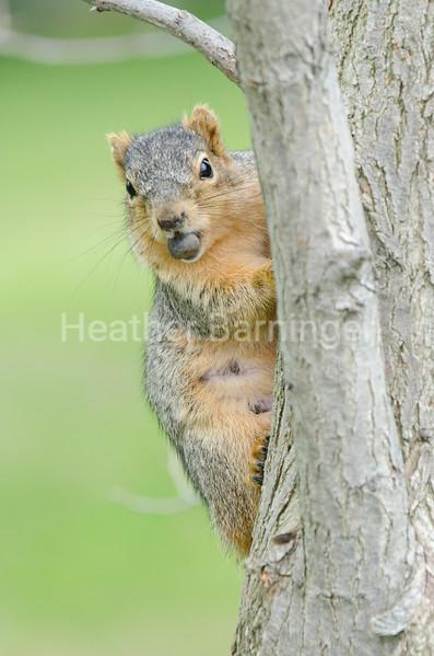 Found a nut!