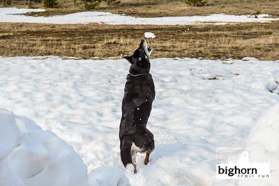 Bighorn-2019-2119