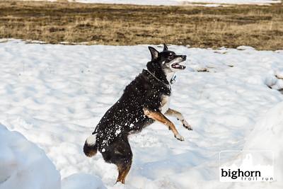 Bighorn-2019-2116