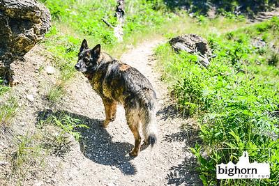 Bighorn-2021-5534