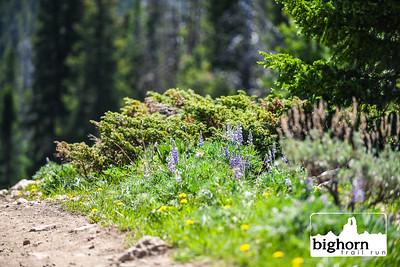 Bighorn-2021-KM-9466