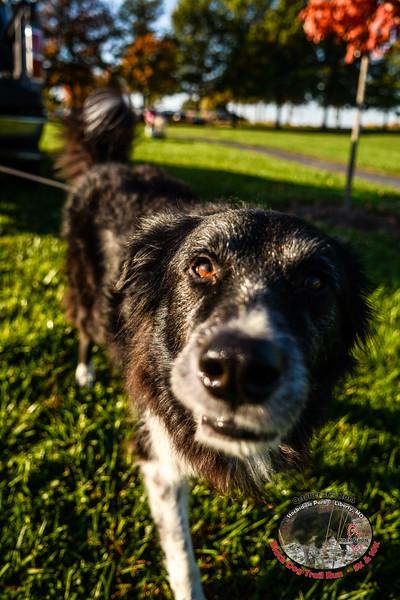 Black Dog Trail Run - 2014