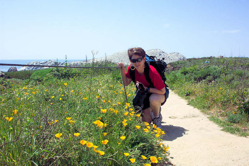 Patti takes great pains (literally) to get close to these California Poppies.