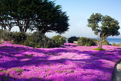 Pacific Grove is a very colorful place.