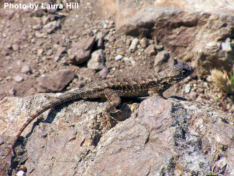 We don't know who the lizard is, but he was certainly enjoying the sunshine.