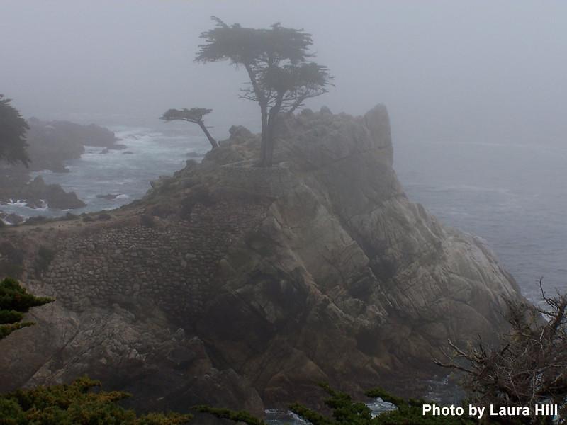 Monterey Cypress - Pebble Beach
