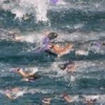 2004 Catalina Triathlon 5