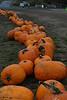 //stoneandsteel.smugmug.com/Running/2006-XC-Krugers-Farm/