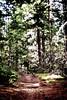 Hood River Trails