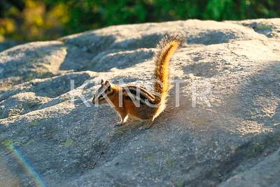 Black Mt Biergiertan squirrel volunteer.  Photo by John Reynolds