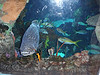 Aquarium exhibit at Cyclfest 2013 venue. Photo Tammy Welshon.
