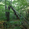 """The future location of the diabolical CP2... """"technically, that's a broken tree, not a leaning tree"""""""