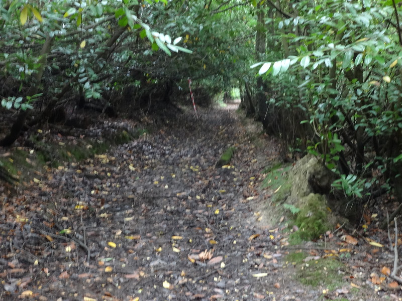 15 Gordons Muddy Footpath