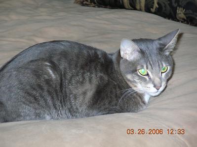 TMS 2006