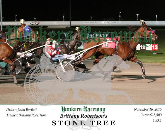 20151116 Race 11- Stone Tree