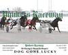 20171217 Race 7- Dog Gone Lucky 4