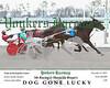 20171217 Race 7- Dog Gone Lucky 3