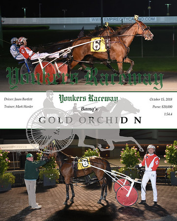 20181015 Race 6-Gold Orchid N