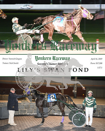 20190416 Race 9-Lily's Swan Pond