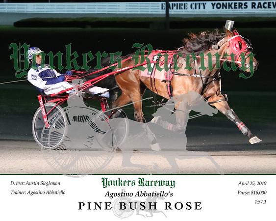 20190425 Race 4- Pine Bush Rose 2