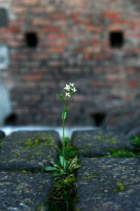 Part of a series: flowers growing in unlikely places