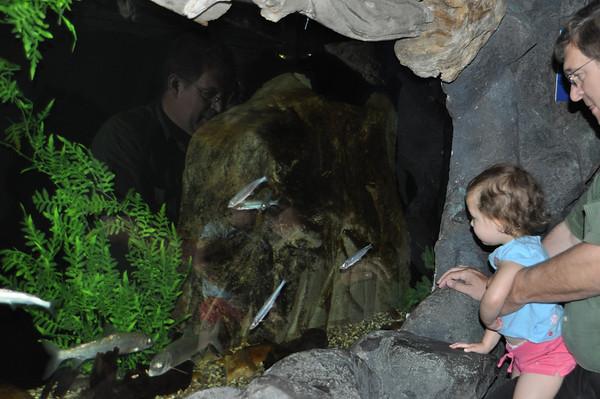 2011, Aquarium with Butlers