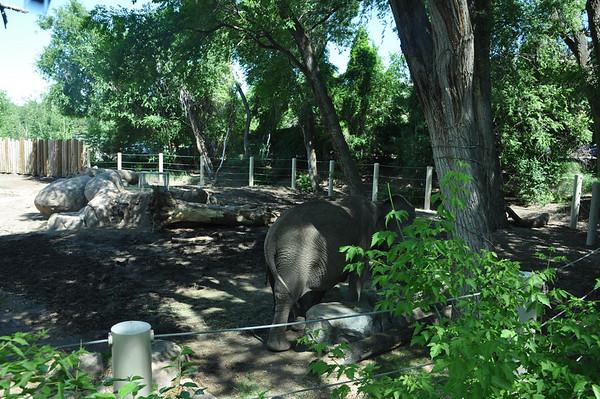 2011, Trip to Hogle Zoo
