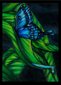 Butterfly on a Leaf - best ordered in a 5x7 format
