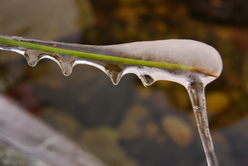 Ice on a branch