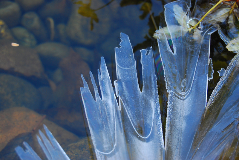 Ice crystals on our pond
