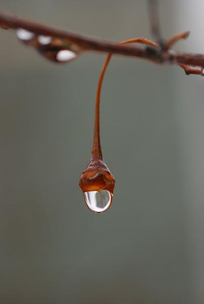 A single drop
