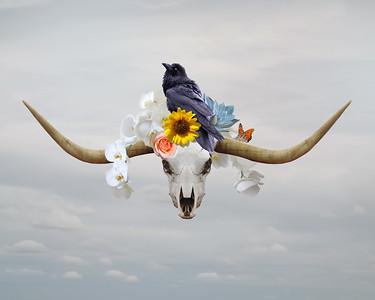 longhorn-20x16