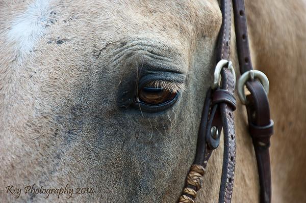 Belterra Horse Racing