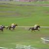 Onesti 1983 ++ Jockey Morten Reinert