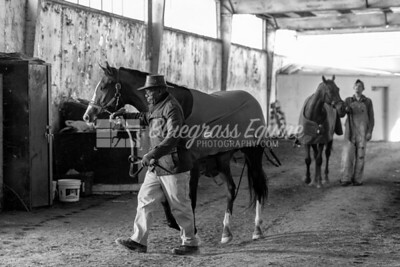 Cowboy and Steve hot walking Thoroughbreds on11.23.18 at the Thoroughbred Training Center, Lexington, KY