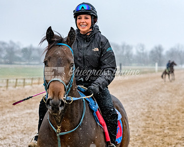 Alexandra Taylor working  Colton at the Thouroughbred Training Center, Lexington, KY on 11.27.18.