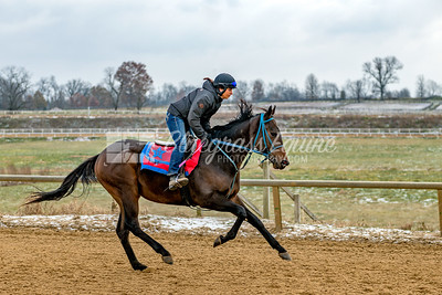 Excercise Rider Alexa Taylor breezing Colton for Tommy Short Stables at the Thoroughbred Training Center, 11.28.18, Lexington, Kentucky. Photo by Laura Palazzolo