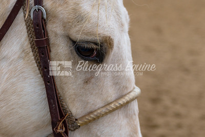 Pony, outrider horse