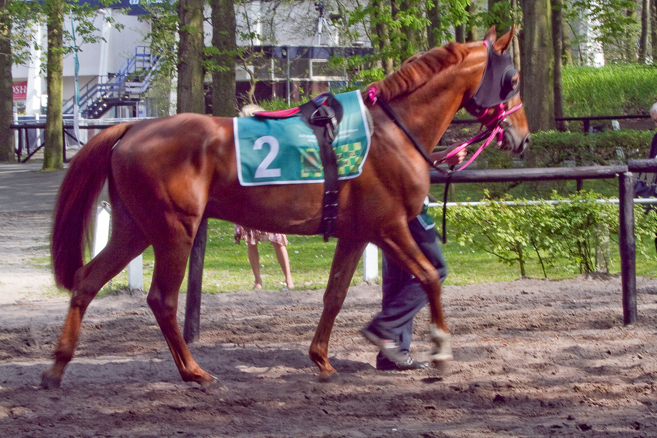 17.  Winner before the race, warming up in saddle area