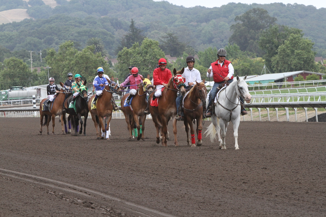 Mules race one