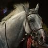 Kareem W'rsan ( winner of Sha Fatima Ladies Cup ), owner Sh Sultan bin Zayed al Nahayan
