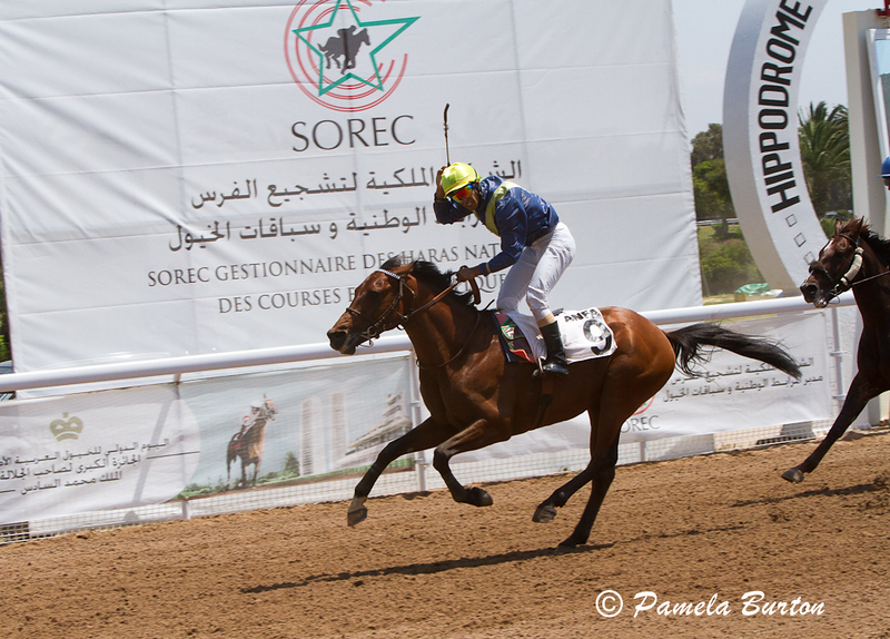 Aman Al Boraq wins 2nd race