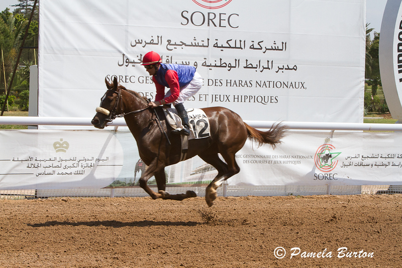 Nour Hadya came 2nd in G.P. De S.A.R. Le Prince Moulay Rachid