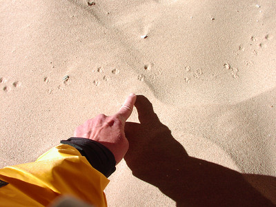Mouse tracks!